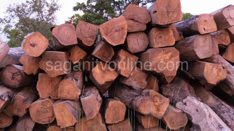 S/R: Gonja Traditional Council Issues Stern Warning against Illegal Logging